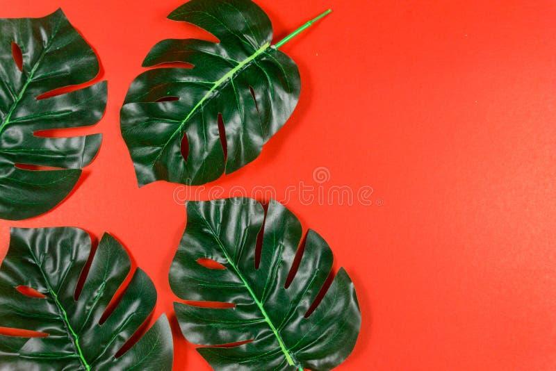 Folhas tropicais Monstera no fundo vermelho Configura??o lisa, vista superior foto de stock