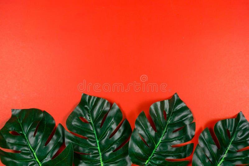 Folhas tropicais Monstera no fundo vermelho Configura??o lisa, vista superior imagem de stock
