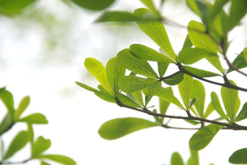 Folhas tropicais novas fotografia de stock royalty free
