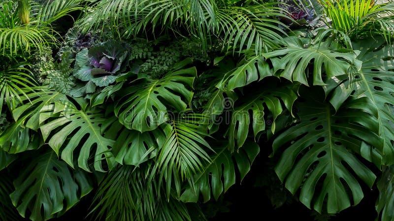 Folhas tropicais verdes de Monstera, de samambaia, e de frondas da palma o rai fotos de stock royalty free