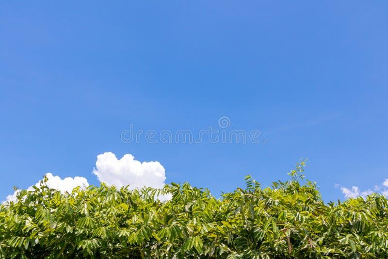 Folhas verde-clara no quadro inferior fotos de stock royalty free