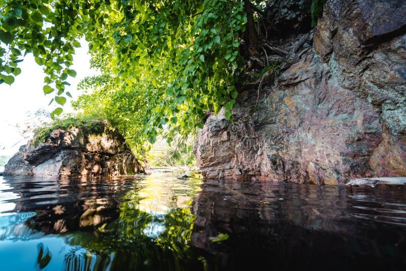 Folhas verdes acima da superfície da água imagens de stock royalty free