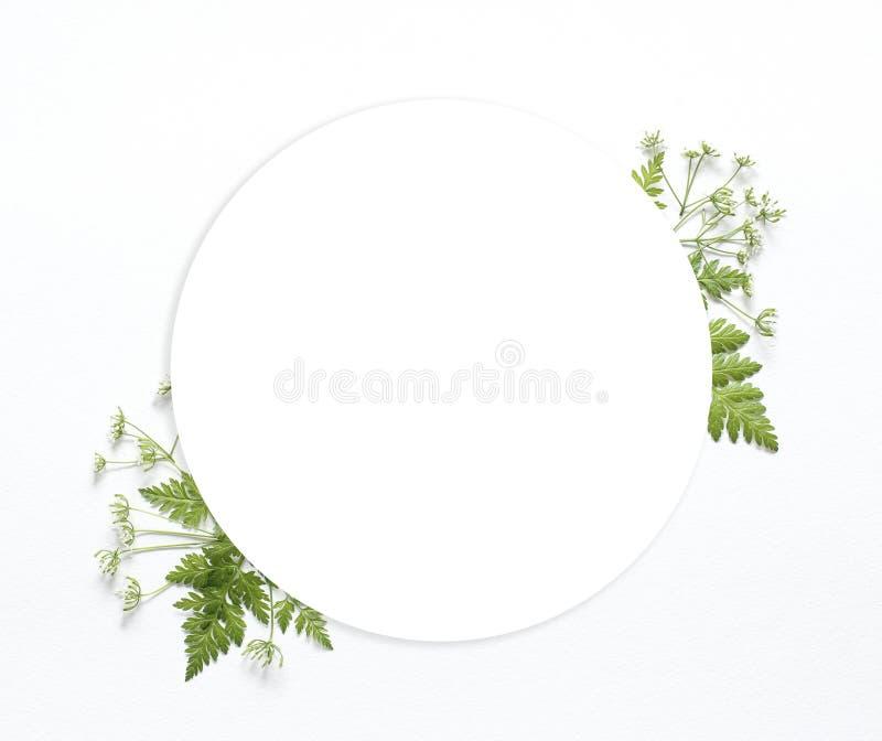 Folhas verdes com lugar redondo branco do quadro fotos de stock royalty free