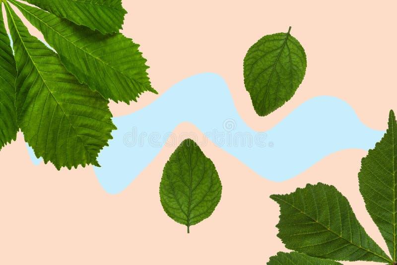 Folhas verdes de castanha e de linho sobre fundo colorido imagem de stock