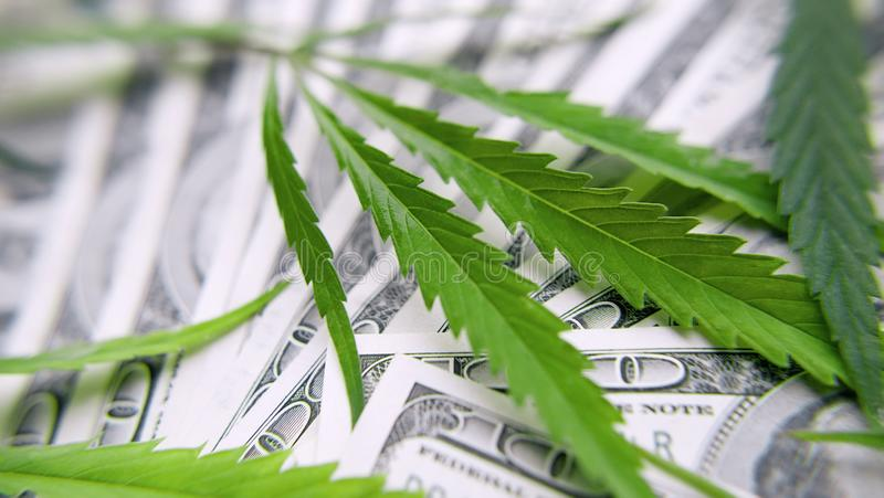 Folhas verdes do cannabis, marijuana no fundo de cem dinheiros dos dólares americanos Cânhamo, folha do ganja Conceito do negó fotografia de stock royalty free