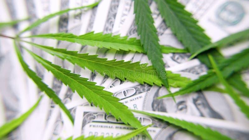 Folhas verdes do cannabis, marijuana no fundo de cem dinheiros dos dólares americanos Cânhamo, folha do ganja Conceito do negó fotografia de stock