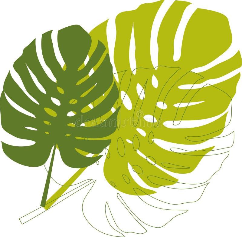 Folhas verdes do philodendron ilustração do vetor