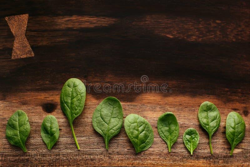 Folhas verdes dos espinafres em uma placa de corte de madeira imagem de stock