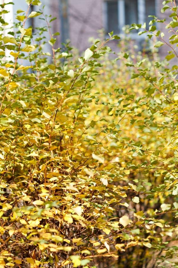Folhas verdes e amarelas perto da casa imagem de stock