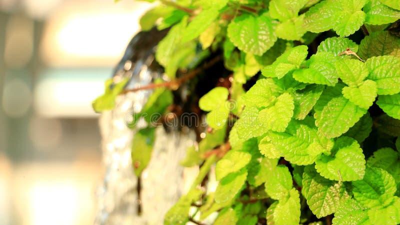 Folhas verdes e planta fresca fotografia de stock