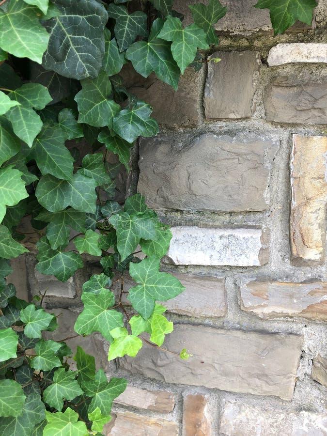 Folhas verdes e textura de pedra imagens de stock