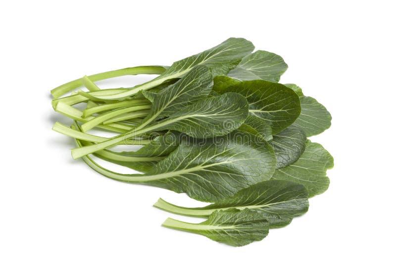 Folhas verdes frescas de Komatsuna fotos de stock royalty free