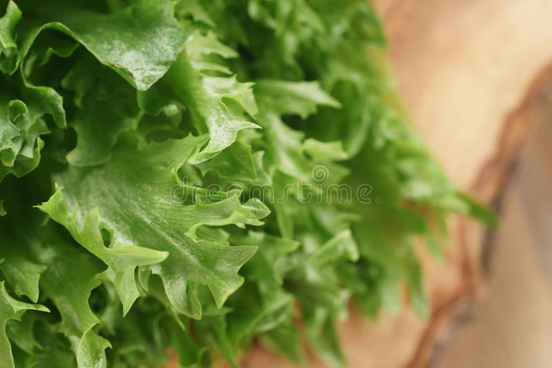 Folhas verdes frescas do frisee da alface imagem de stock