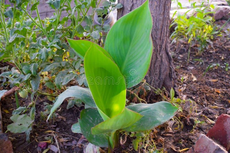 Folhas verdes longas lisas, planta fotos de stock