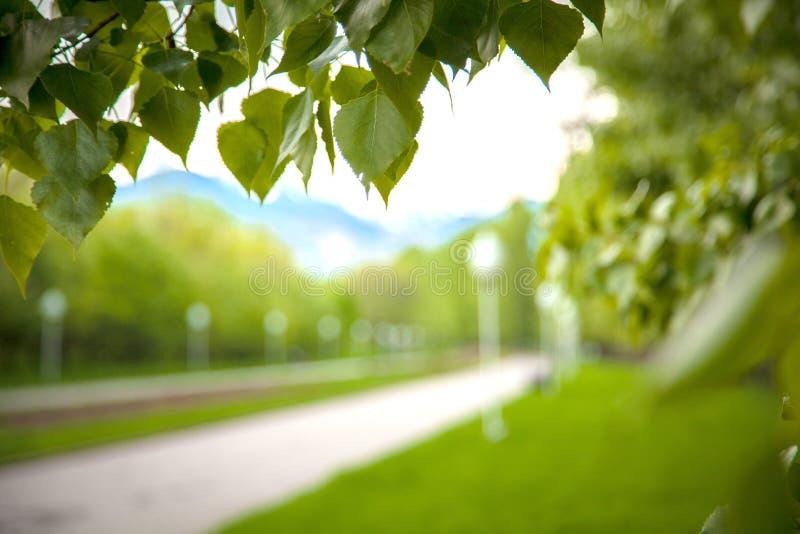 Folhas verdes para o fundo do verão foto de stock royalty free