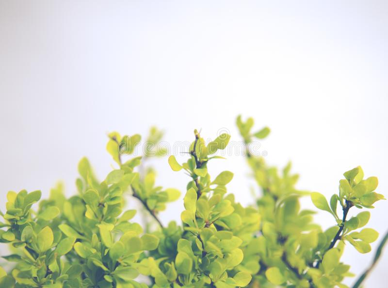 folhas verdes pequenas isoladas sobre o branco fotos de stock royalty free
