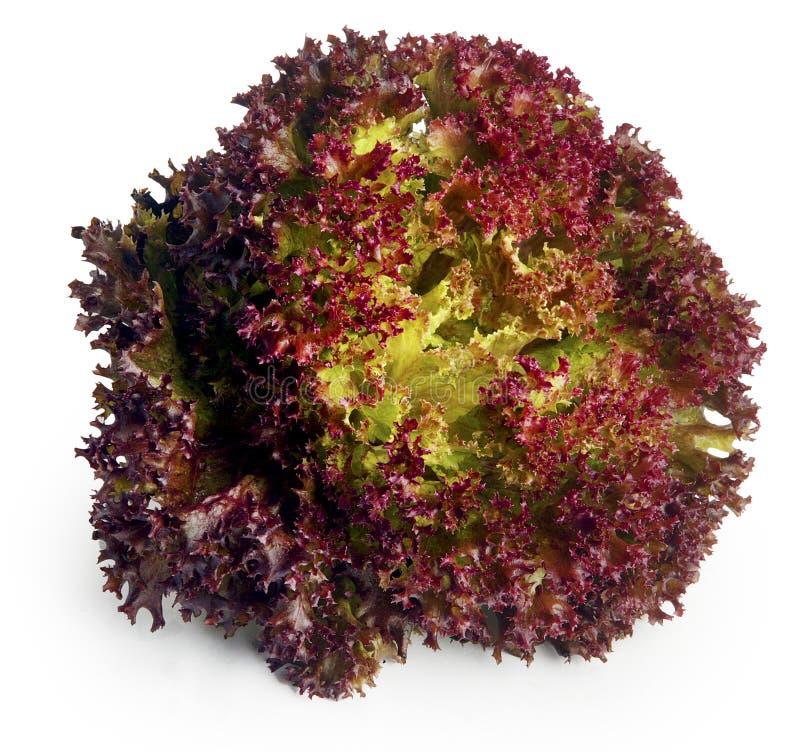 Folhas vermelhas da alface foto de stock