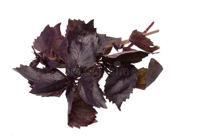 Folhas vermelhas da manjericão fotografia de stock royalty free