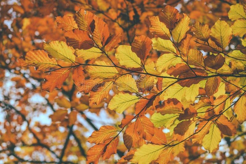 Folhas vermelhas do amarelo imagem de stock royalty free