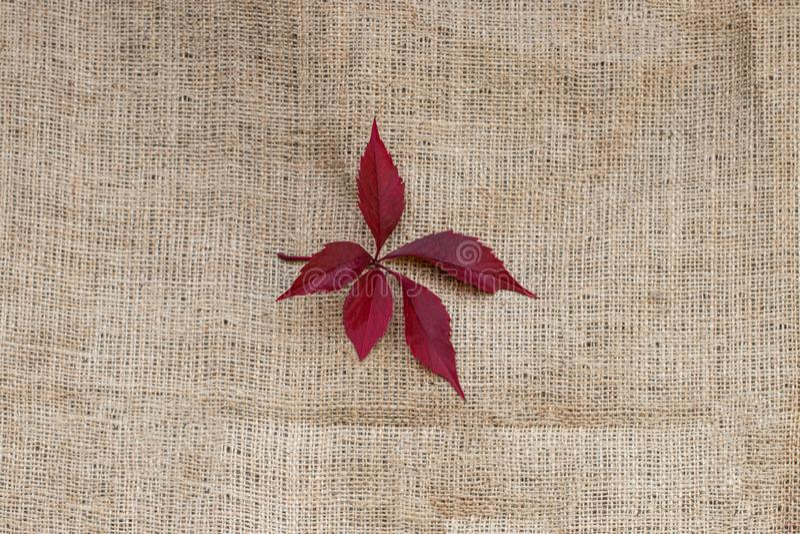 Folhas vermelhas do outono em fundo de textura de saco imagem de stock