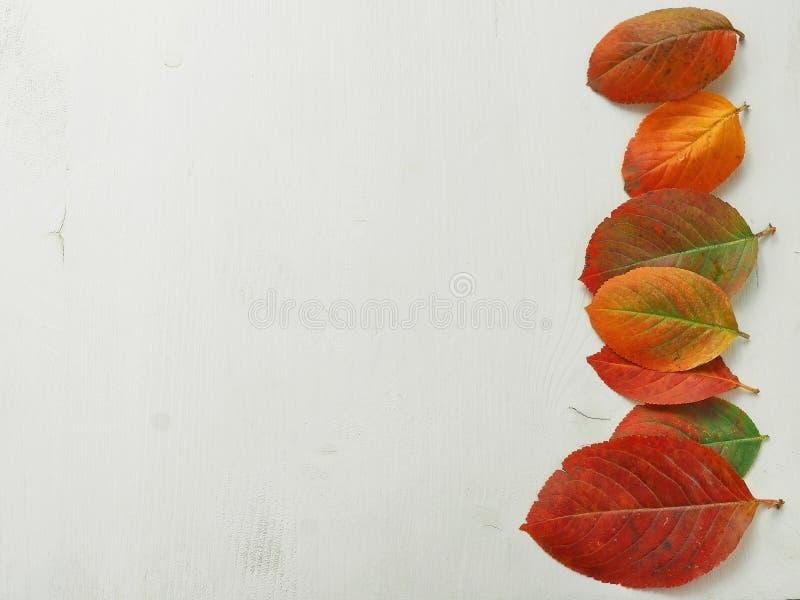 Folhas vermelhas do outono no lado do assistente do fundo de madeira branco imagem de stock royalty free