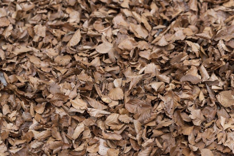 Folia na tle leśnym zdjęcie stock