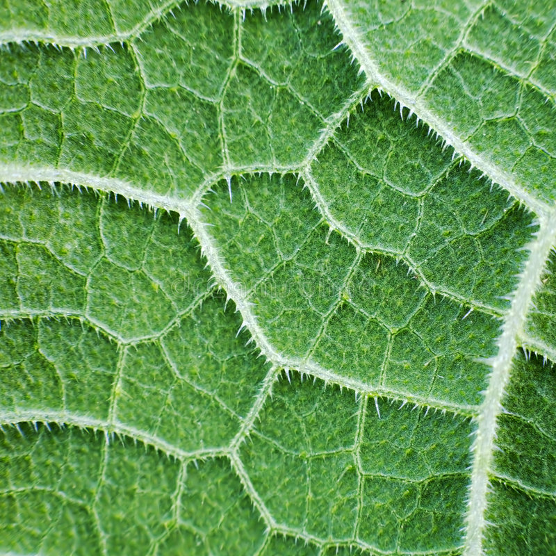 Foliage. The surface of green leaf with foliage royalty free stock photos