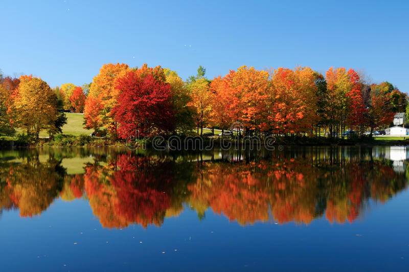 foliage fotografia de stock royalty free