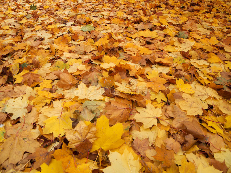 Download Foliage in autumn stock image. Image of nature, outdoor - 21890097