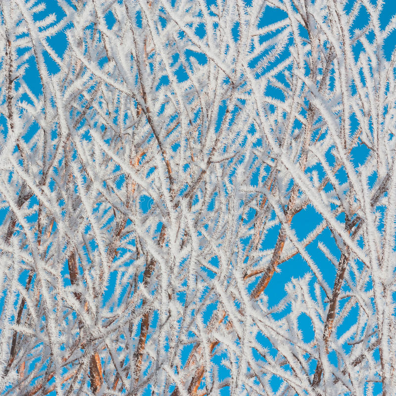 Download Foliage Covered In Hoar Frost Stock Photo - Image of close, season: 64649360
