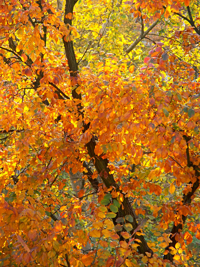 Foliage In Fall Colors Royalty Free Stock Photography
