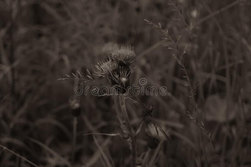 Foliage in the forest abstract background. grass and flowers texture. Foliage in the forest abstract background. fresh grass and flowers texture, botany, concept royalty free stock image