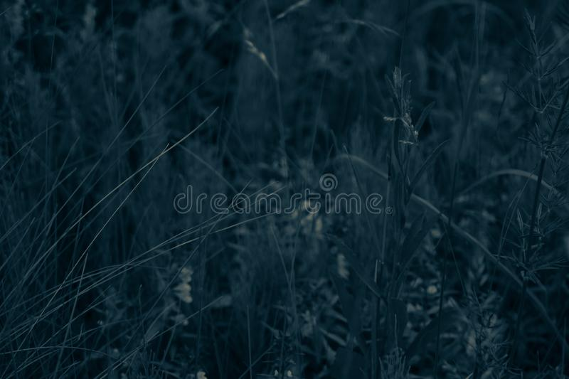 Foliage in the forest abstract background. grass and flowers texture. Foliage in the forest abstract background. fresh grass and flowers texture, botany, concept stock photography