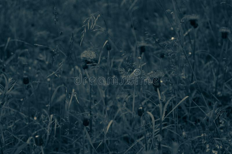 Foliage in the forest abstract background. grass and flowers texture. Foliage in the forest abstract background. fresh grass and flowers texture, botany, concept royalty free stock photos