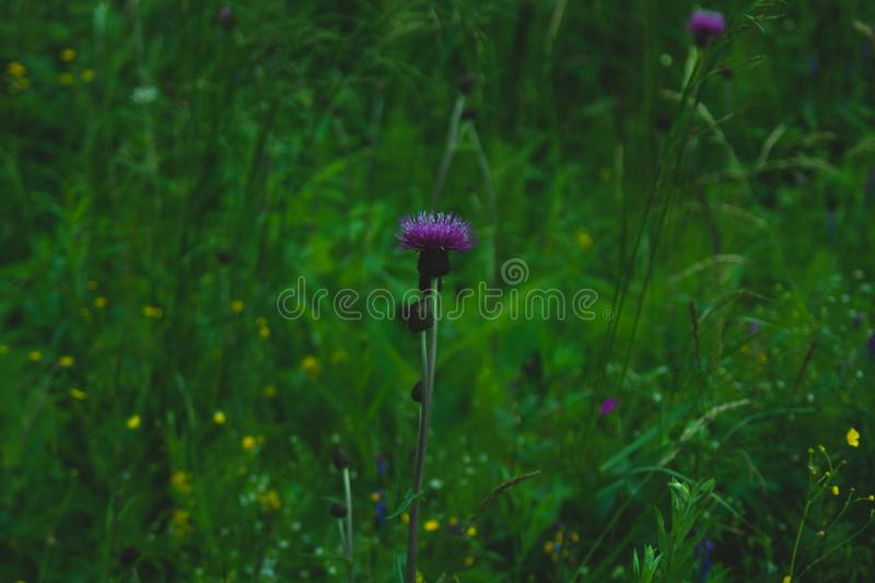 Foliage in the forest abstract background. grass and flowers texture. Foliage in the forest abstract background. fresh grass and flowers texture, botany, concept royalty free stock images