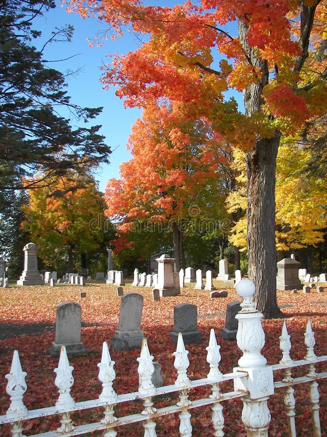 Download Foliage in Graveyard stock image. Image of hampshire - 10779353