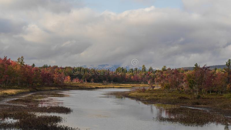 Foliage Inlet royalty free stock images