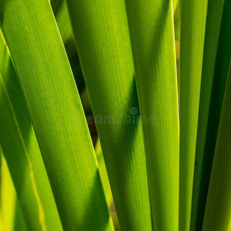 Foliage marsh sedge. In a sunny day royalty free stock photography