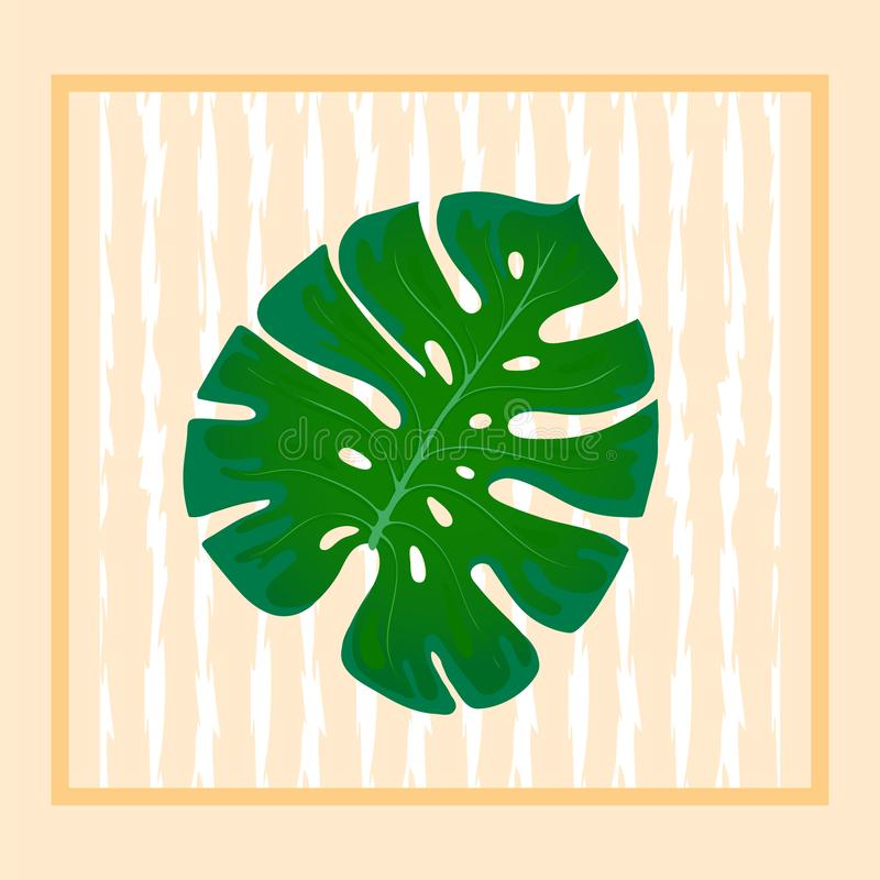 Foliage monstera. Trend element of the palm leaf design on a abstract background. Tropical exotic and home plants royalty free illustration