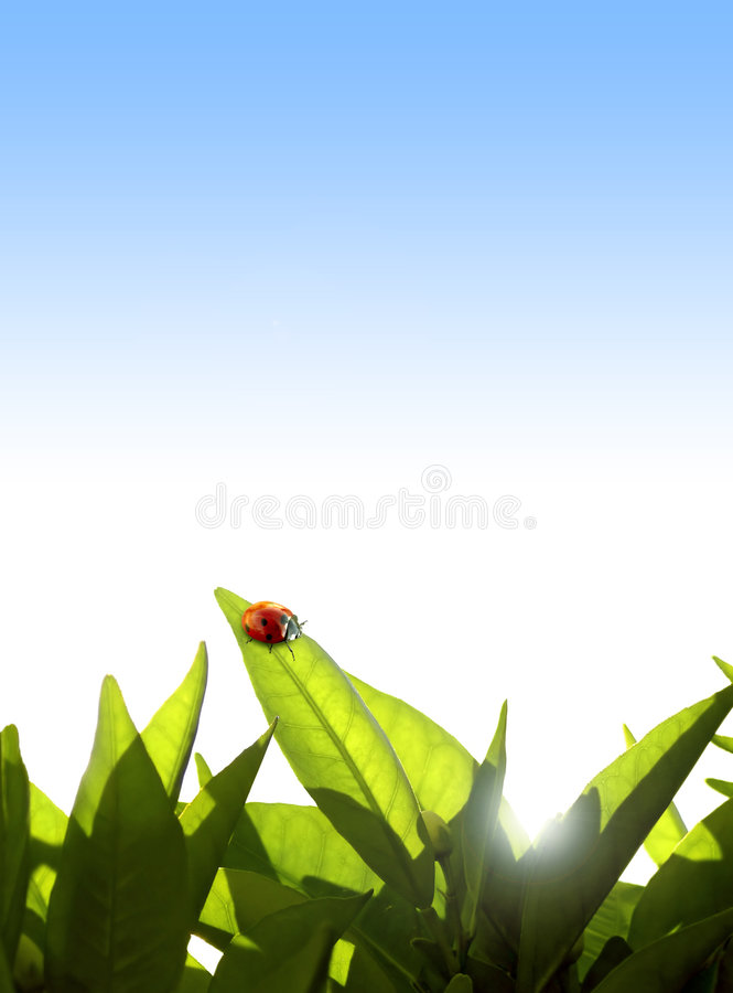 Download Foliage Ornament Royalty Free Stock Photography - Image: 2319517