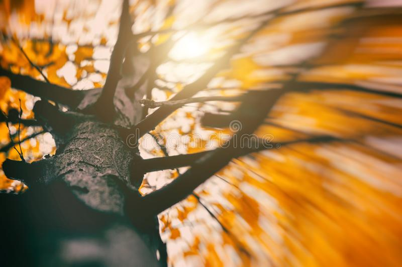 Foliage in the park. Falling Leaves. Autumn Wind blowing royalty free stock photography