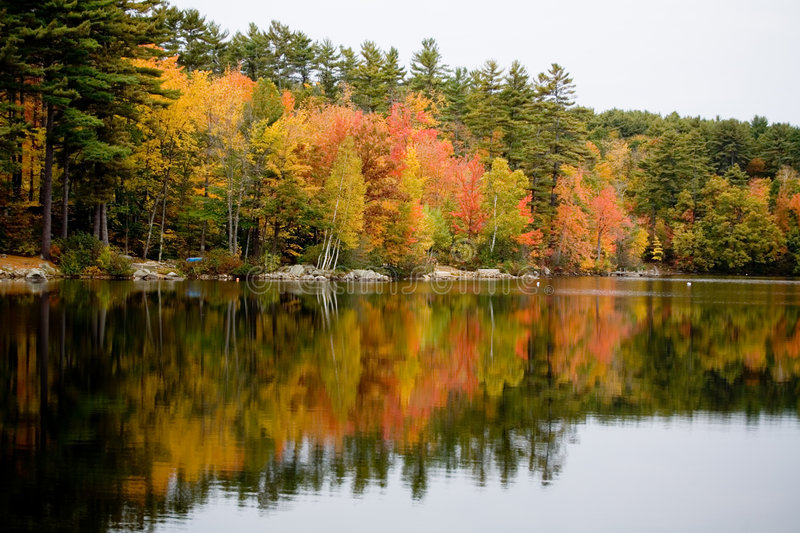 Foliage reflected in Lake stock photography