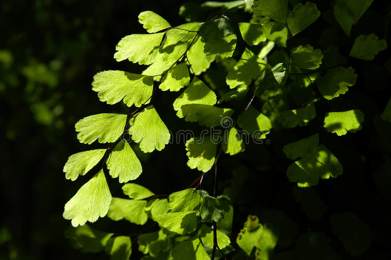 Foliage and shadow stock photo