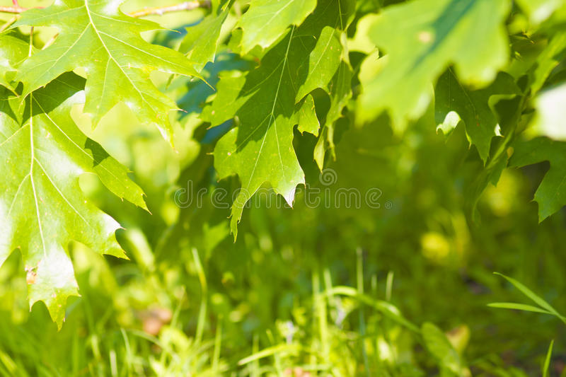 Download The Foliage Of Trees And Grass In Summer Stock Photo - Image: 83712725