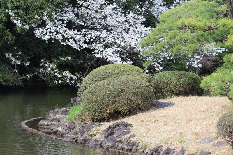 Foliage types in spring at Shinjuku Gyoen National Garden Tokyo. Cherry Blossoms and more at Shinjuku Gyoen National Garden Tokyo Japan stock photography
