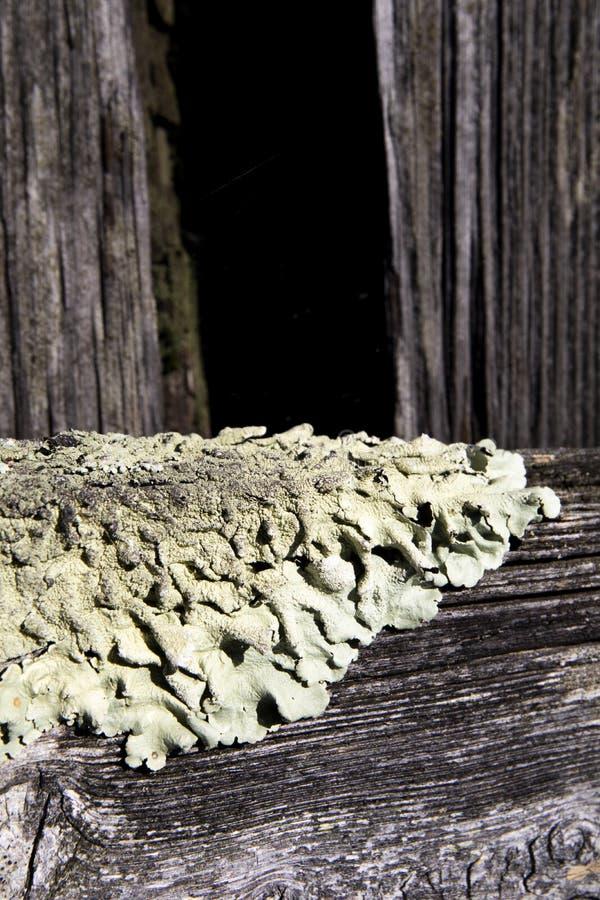 Foliose лишайник на ограждать фермы стоковое изображение