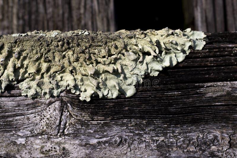 Foliose lav på skogsmarkträd royaltyfri fotografi