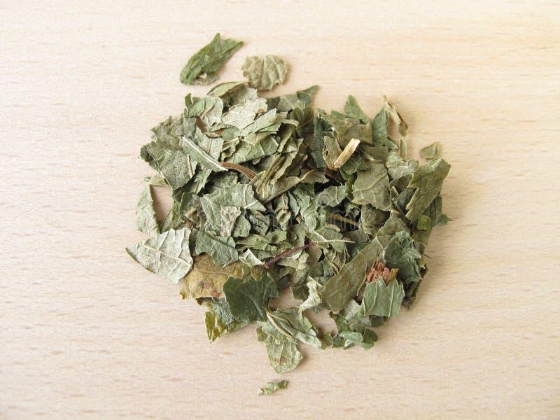folium blackcurrant выходит ribis nigri стоковые изображения rf