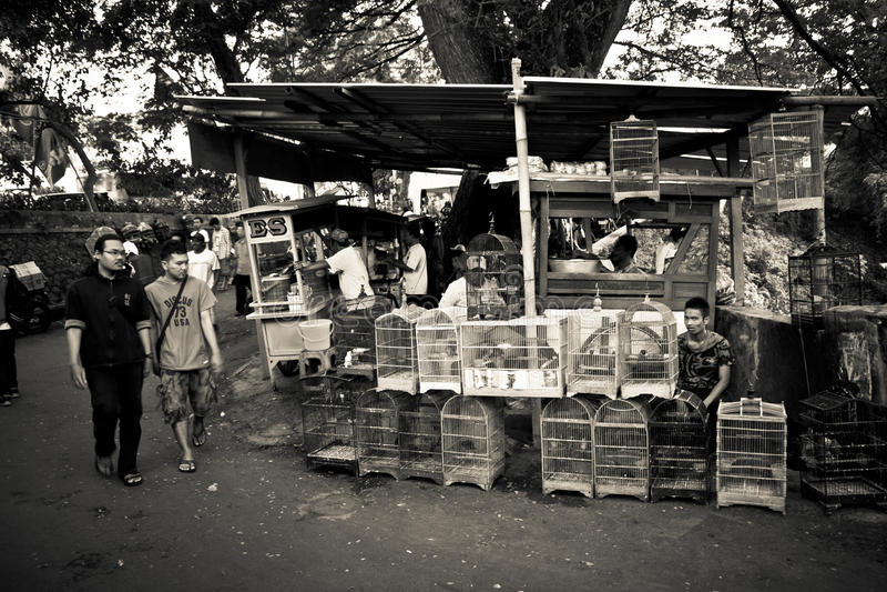 Folk av fågelmarknaderna av Malang, Indonesien royaltyfria bilder