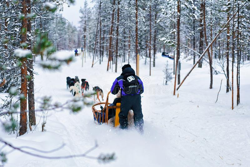 Folk i Husky Dogs Sled i Rovaniemi i Finland Lapland arkivbild